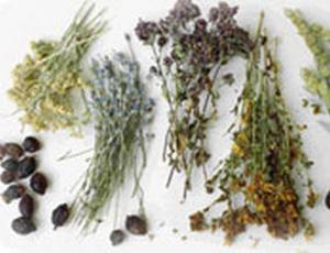 Кариес: профилактика и лечение лекарственными травами