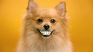 Биологи: человеческие зубы могут регенерироваться из челюсти