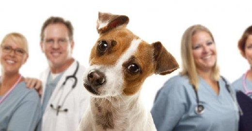 Современная и качественная помощь вашему любимому питомцу — ветеринарная клиника в Москве