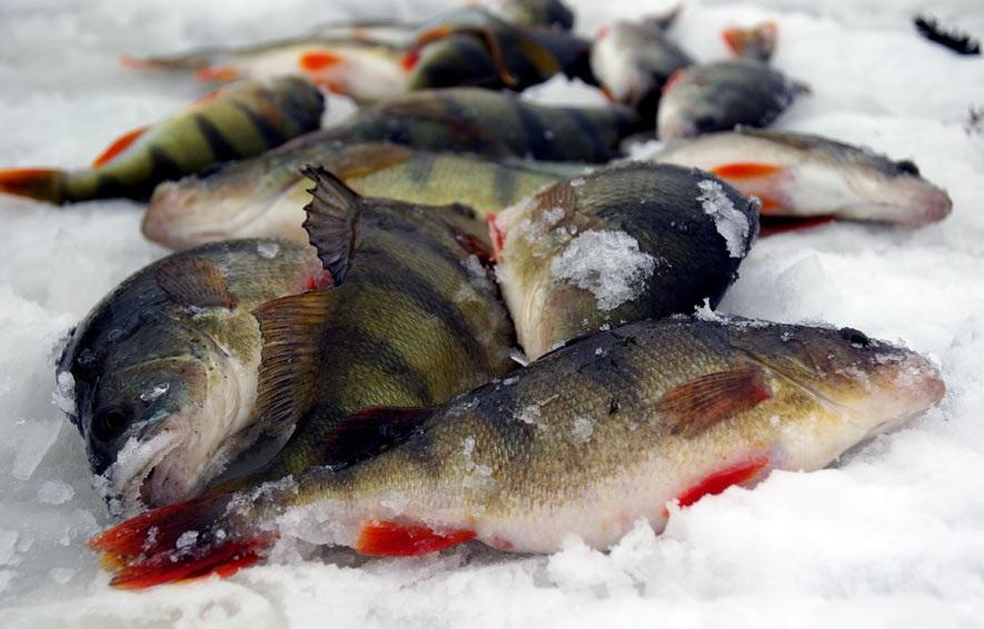 Чем интересна зимняя рыбалка