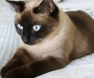 Кошки помогут при гингивите