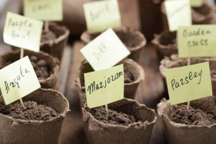 Лунный календарь посадки растений корневого и черешкового сельдерея
