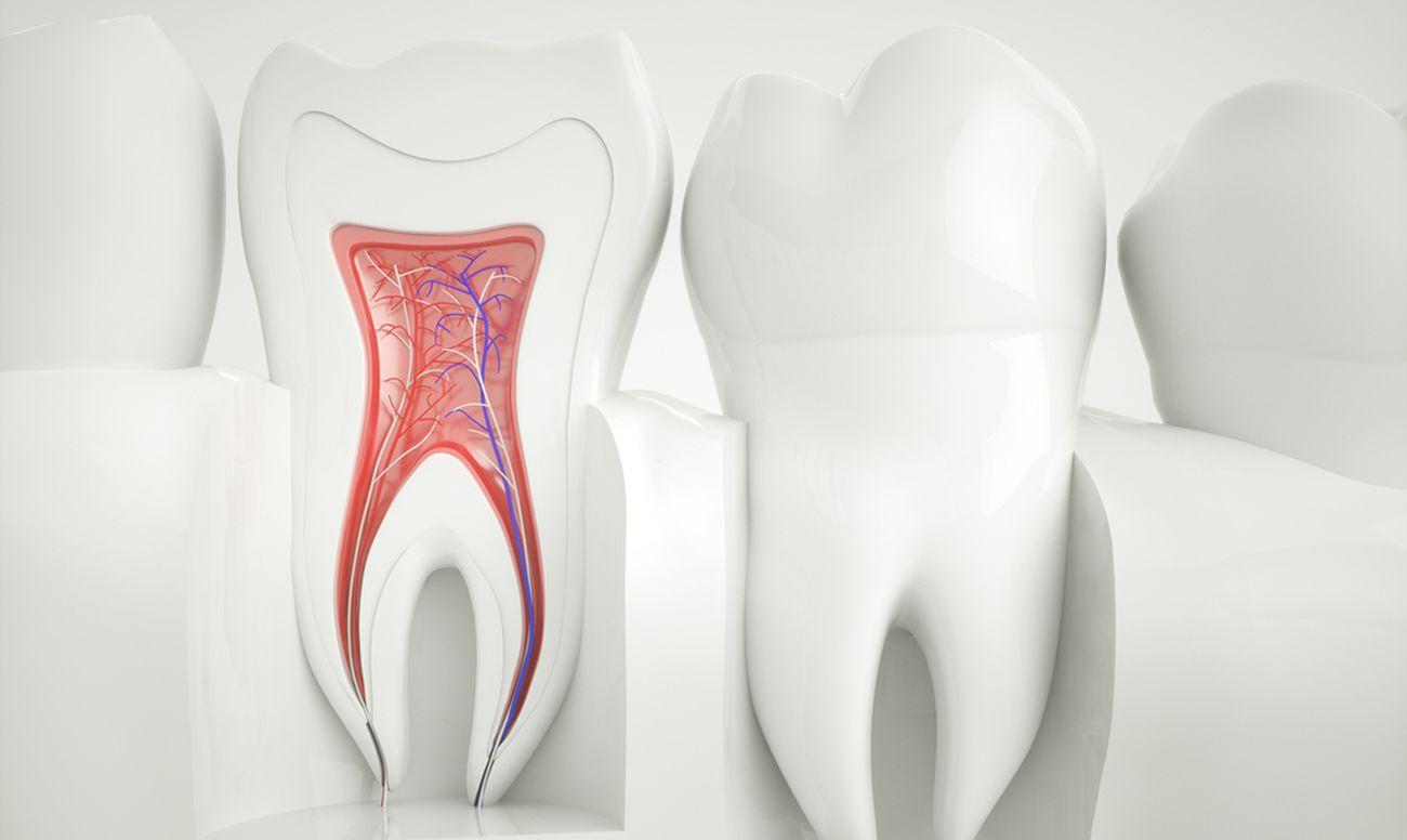 Корневые каналы зубов станут искусственными