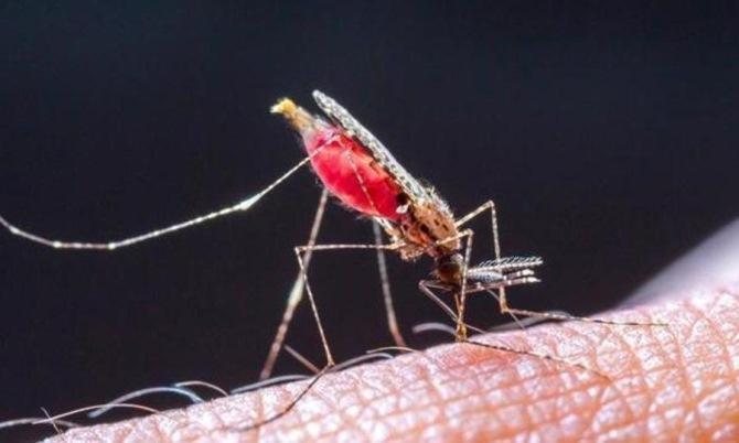 Триклозан в составе зубной пасты может быть использован как активное вещество в лечение малярии