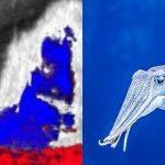 Чернила кальмара как средство диагностики пародонтита