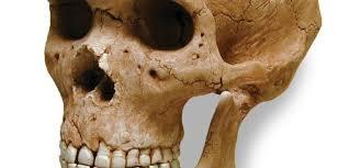 Анализ износа зубов выявил ключевое преимущество современных людей перед неандертальцами