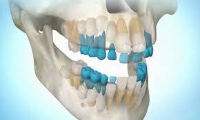 Люди смогут выращивать зубы