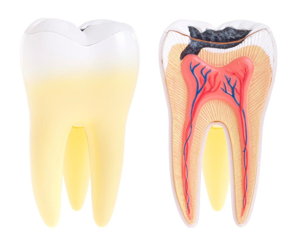 Что такое пульпа зуба