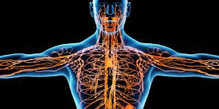 Инородные материалы во рту вредят иммунной системе