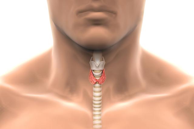 Гипертиреоз – заболевание щитовидной железы