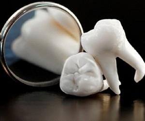В теле найдена ткань, из которой будут выращивать зубы