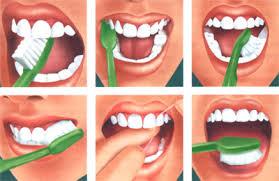 Бактерии на зубах древнего человека говорят о болезнях