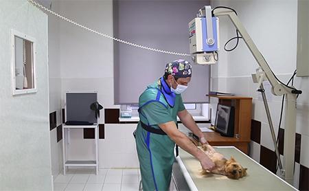 Услуги клиники «Bio-vet». Ветеринарный эндокринолог.