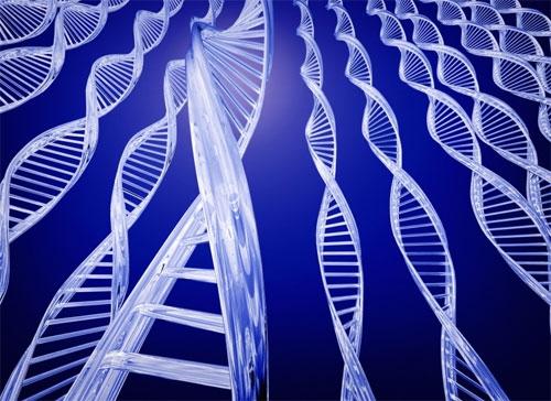 Найден ген, формирующий зубы