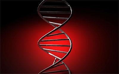 Ученые обнаружили ген зубной эмали