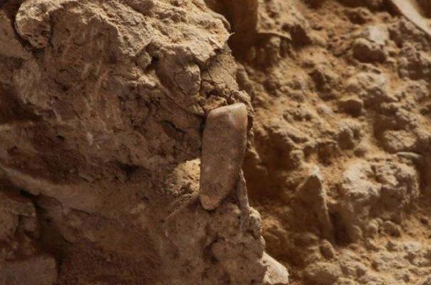 Нашли зуб, возраст которого насчитывает более 500 тысяч лет
