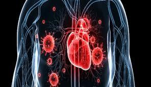 Изучен механизм развития инфекционного эндокардита