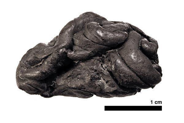 Ученые провели анализ жвачки из березового дегтя возрастом 5 700 лет